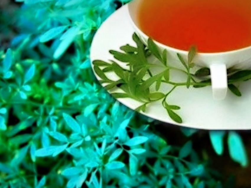 Té De Ruda Descubre Para Qué Sirve Y Qué Beneficios Tiene Para La Salud Gastrolab
